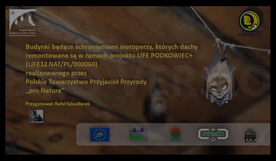 stado_podkowcow